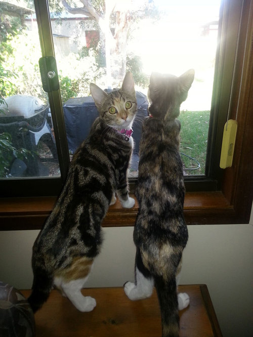 密談する猫たち01