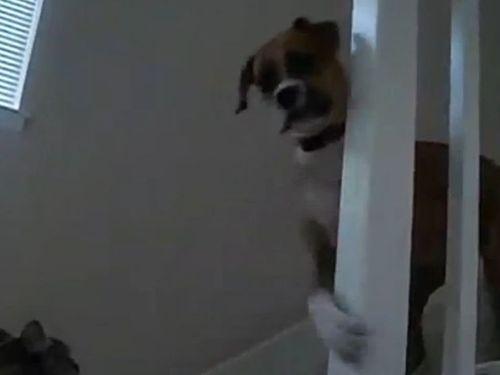 猫が怖い犬01
