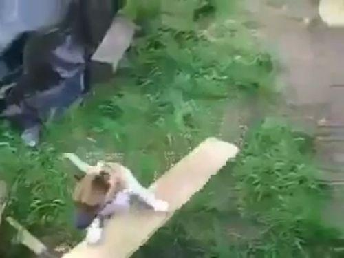 自動犬プレイ・マシーン01