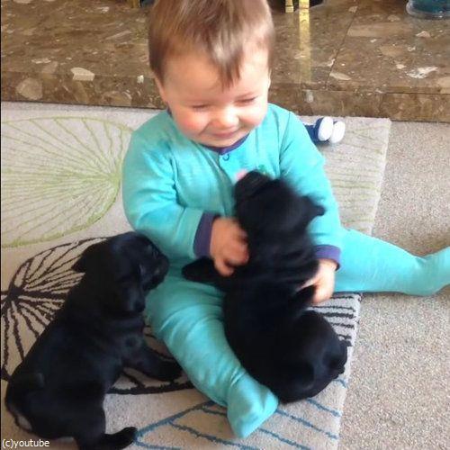 赤ちゃんとパグ01
