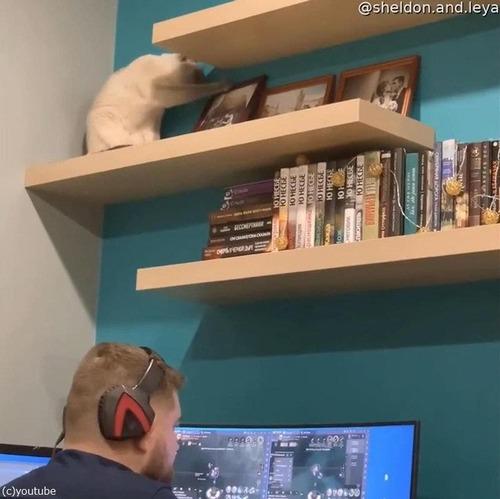 頭上の棚から物を落とす猫02