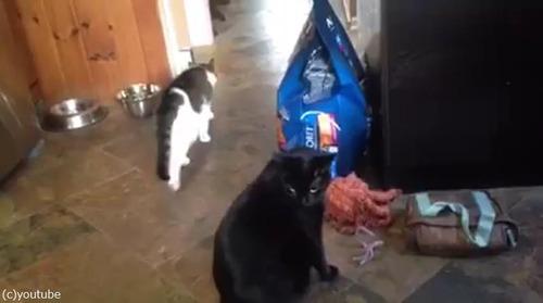 猫パンチしない猫04