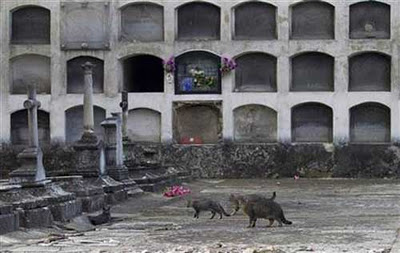 スペインの墓地01