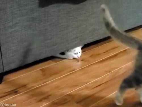 猫、逆さにスライディング00