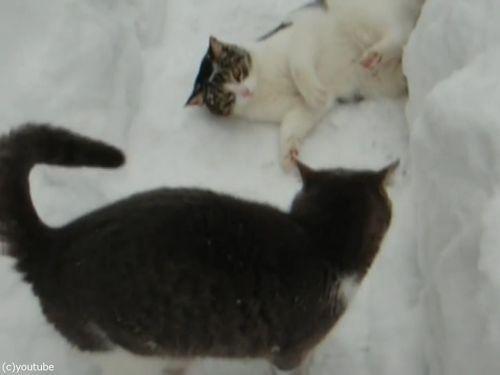 雪遊びが大好きな猫02