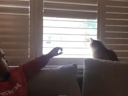 猫、お父さんに反抗する00