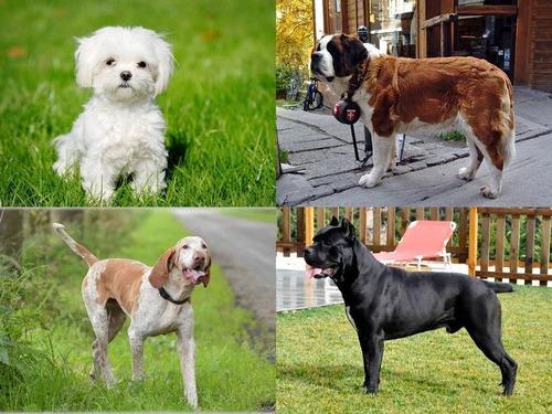 アメリカ50州で最も愛されている犬