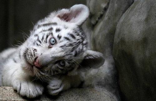 動物の赤ちゃん36