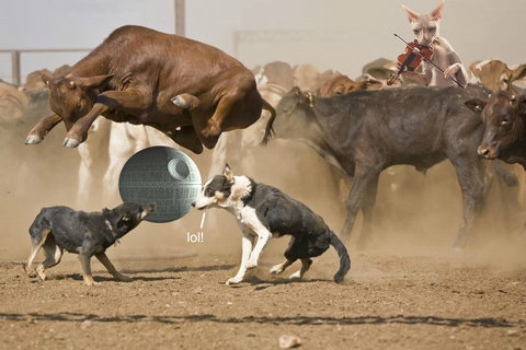 牛のジャンプ力を11