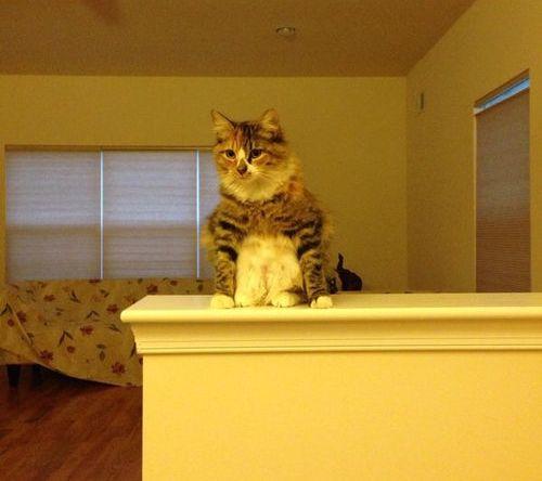 うちの猫…座り方がおかしいんだよ02