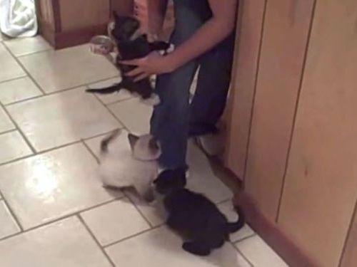 お腹を空かせた子猫たち01