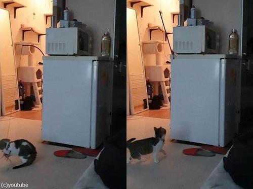 やさしいお姉ちゃん猫01