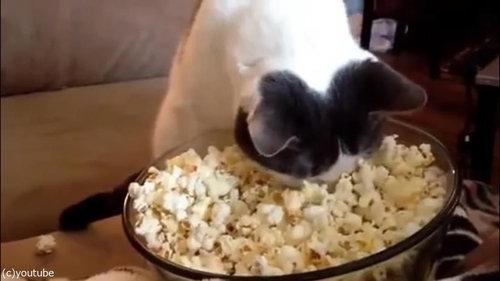 作りたてのポップコーンと猫04