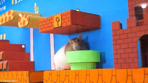 ペットのために作ったマリオ風迷路07