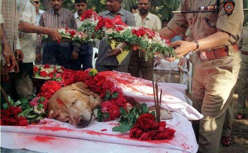 テロの脅威から救ったヒーロー犬01
