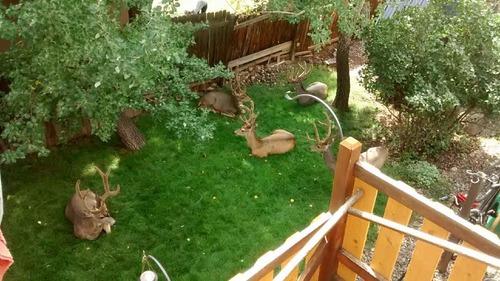 コロラド州の庭01