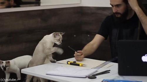 猫が3匹いるところで仕事03