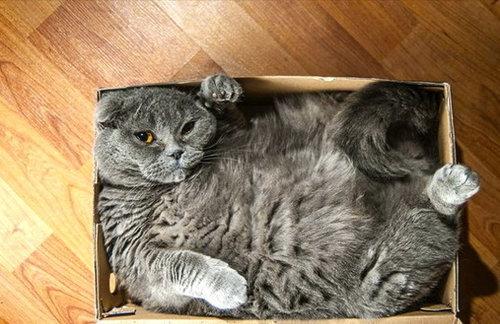 箱入り猫07