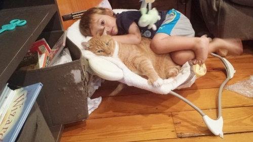 赤ちゃんの育ての親は猫07