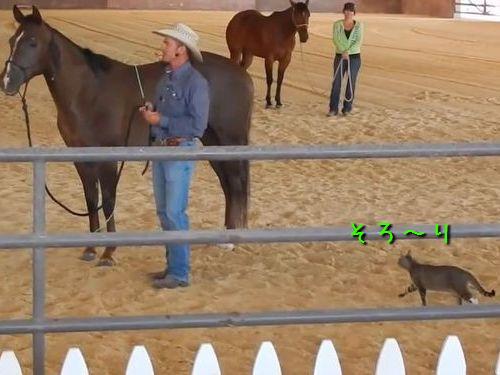 馬に乗ろうとする猫00