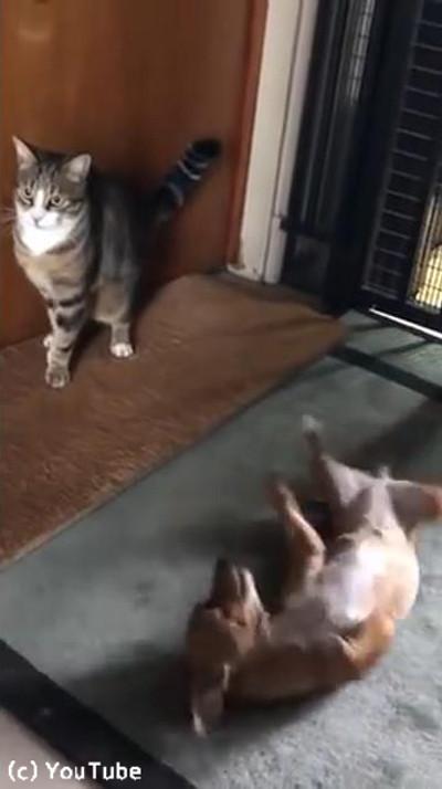 犬と猫のテンションの違い04