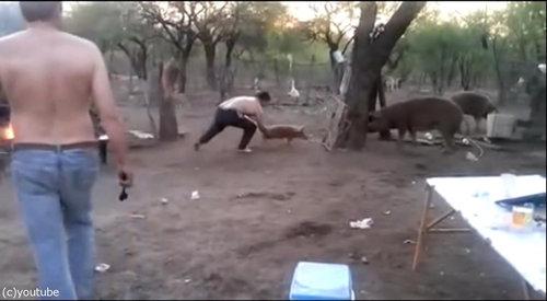 親豚が激怒01