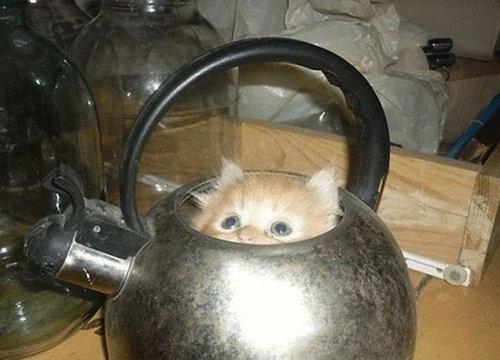 すき間にハマった猫12