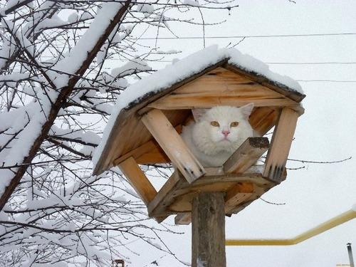 鳥のように木に止まる猫たち03