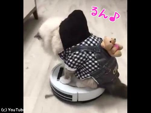 ルンバ猫にまさかのハプニング00
