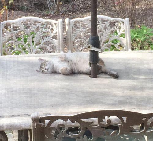 野良猫が家族以上の存在に02