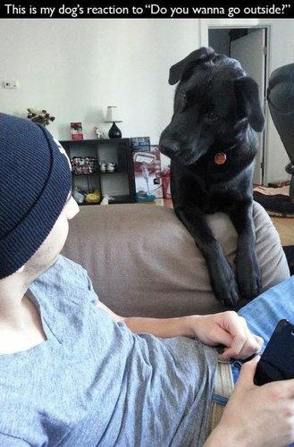 犬の飼い主ならわかること 001