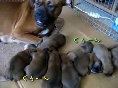 子犬の大合唱