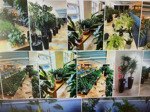 警備員がオフィスビルの植物を守る01