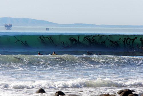 波越しに見える海草が怖い01