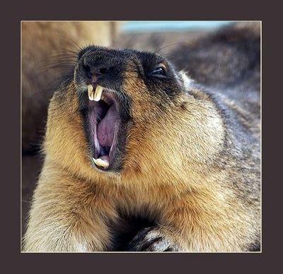 あんぐりと口を開けすぎな動物たち08