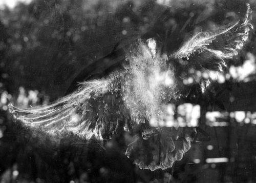 鳥の跡05