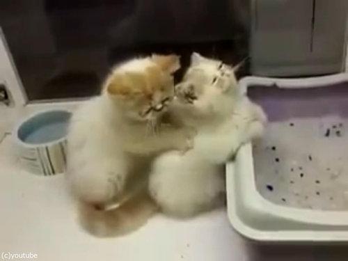 猫が猫の肩もみ04
