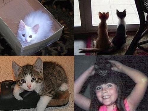 成長した猫00