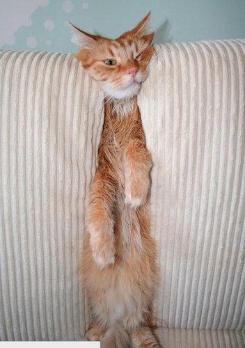 犬や猫の家具の使い方06