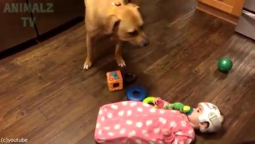 赤ちゃんに蹴られた猫、犬に八つ当たり07