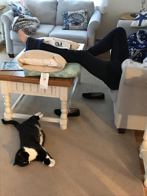 足を上げる猫01