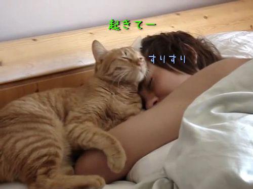 すりすり猫・目覚まし00