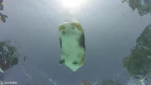 コーギーの泳ぎを水中からじっくり観察01