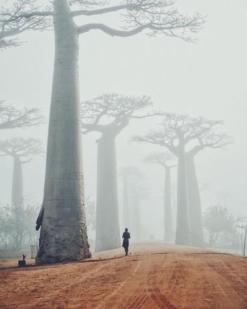 バオバブの木01