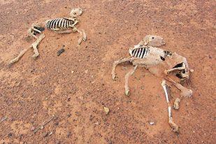 オーストラリアの干ばつ09