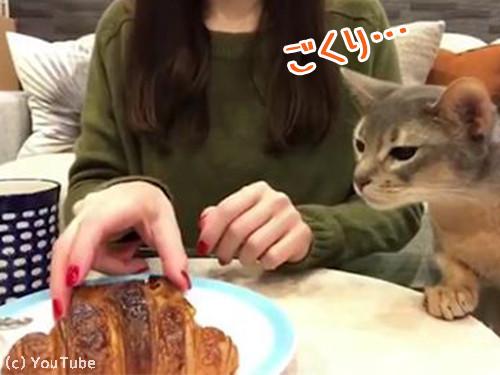 猫「クロワッサンください」00