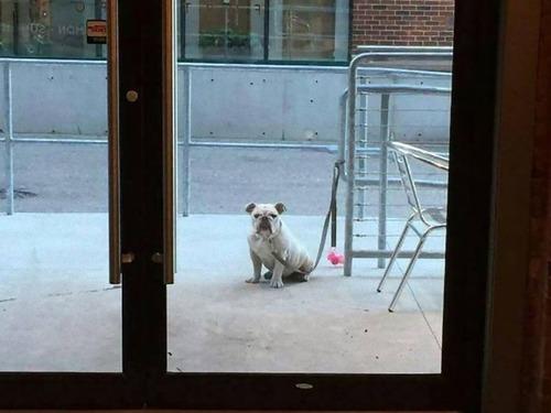 飼い主を待つ犬たち05