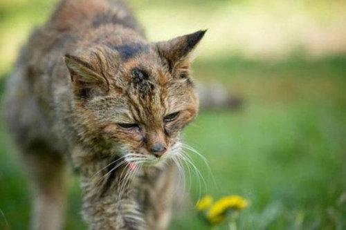 最高齢の猫10