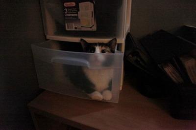 潜む猫03