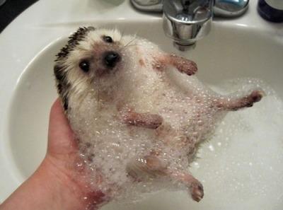 ハリネズミ洗い08